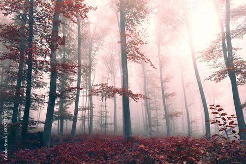 piekny-czerwony-kolorowy-las-mglisty-krajobraz