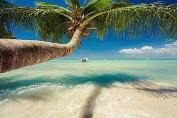 Fototapeta Piękne palmy drzewo nad Morze Karaibskie