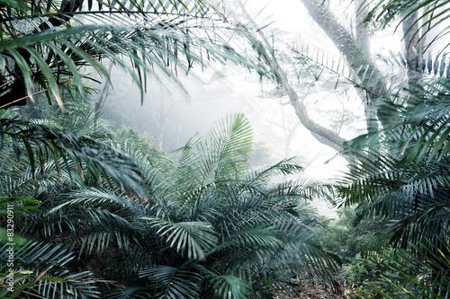 drzew-krzak-w-lesie