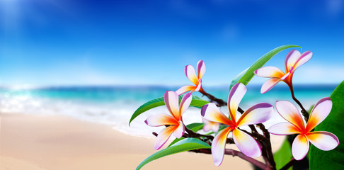 Obraz na Szkleplumeria flowers on the beach