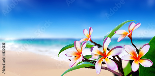 Poster Frangipani plumeria flowers on the beach