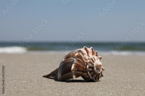 Fotografie, Obraz  Sea shell