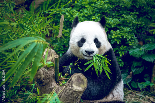 Photo Stands Panda Giant panda