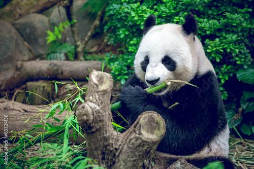 Stickers pour porte Panda Giant panda
