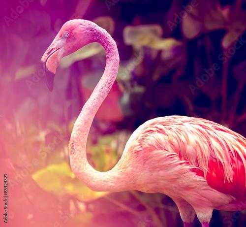 Garden Poster Flamingo Pink Flamingo