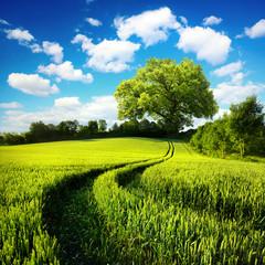 FototapetaIdyllische ländliche Natur