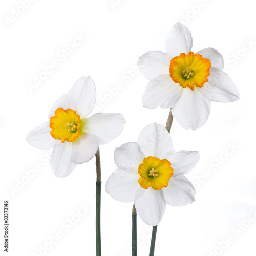 Papiers peints Narcisse Three narcissus in colorful vases on a white background.