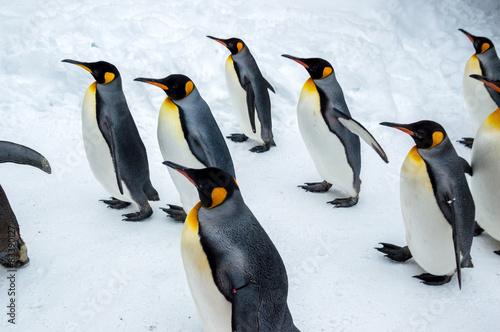 Papiers peints Pingouin ペンギン