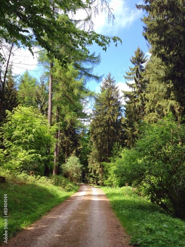 lesna-sciezka-w-deister-dolna-saksonia