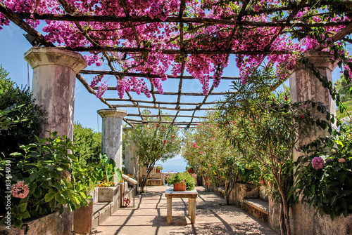 Costiera Amalfitana,fioritura