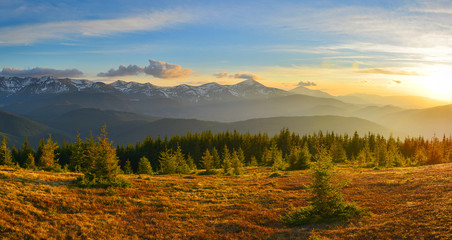 Mountain sunset with meadow and forest