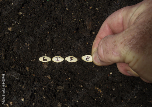 Fotografie, Obraz  Sowing The Seed Of Life