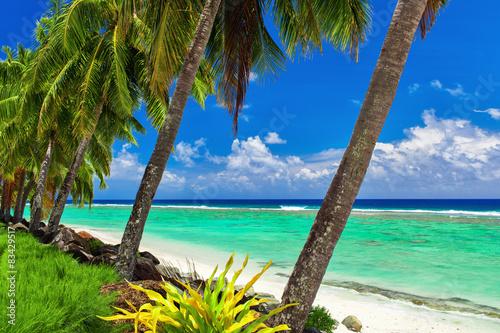 Fotografie, Obraz  Coconut palm trees over the tropical beach of Rarotonga, Cook Is