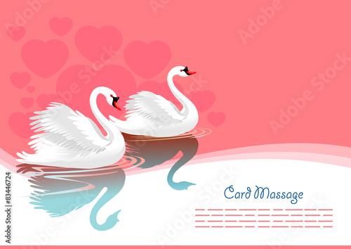 Swan greeting card Fototapeta