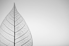 Skeleton Leaf On Grey Backgrou...