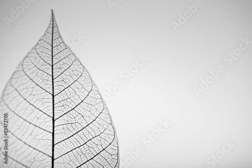 Photo sur Aluminium Squelette décoratif de lame Skeleton leaf on grey background, close up