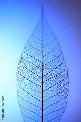 Poster Squelette décoratif de lame Skeleton leaf on blue background, close up