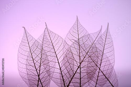 Recess Fitting Decorative skeleton leaves Skeleton leaves on purple background, close up