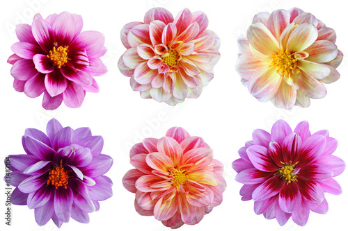 Deurstickers Dahlia Dahlia flower Set