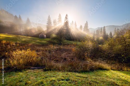 Foto auf Gartenposter Wald Misty autumn morning on the mountain hills