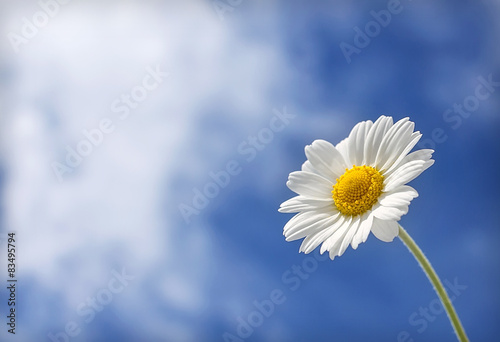 In de dag Madeliefjes white daisy on a background of clouds