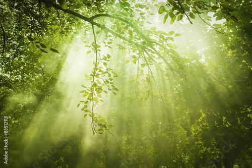Obraz Green Forest with Sunbeam - fototapety do salonu