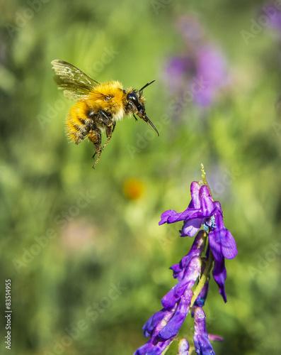 Photo  bourdon et fleur