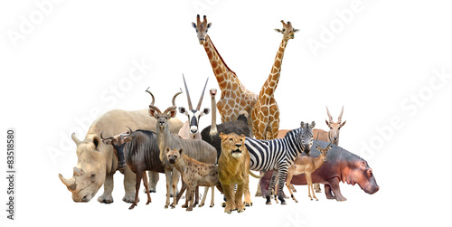 In de dag Afrika group of africa animals
