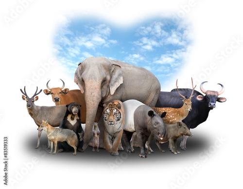 Fotobehang Leeuw group of asia animals