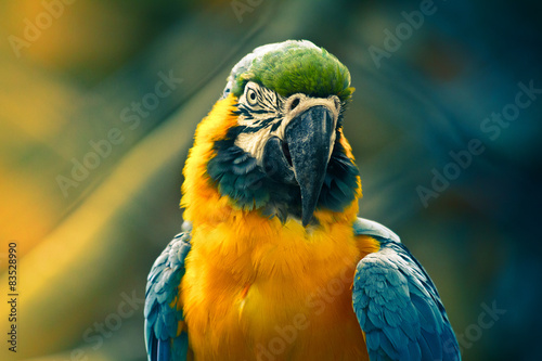 Papel de parede Close up of parrot