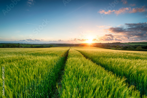 Canvas Sunset over Barley Fields