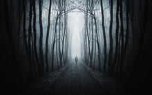 Man Walking On Path In Strange Dark Forest With Fog