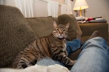 Intense Lap Cat