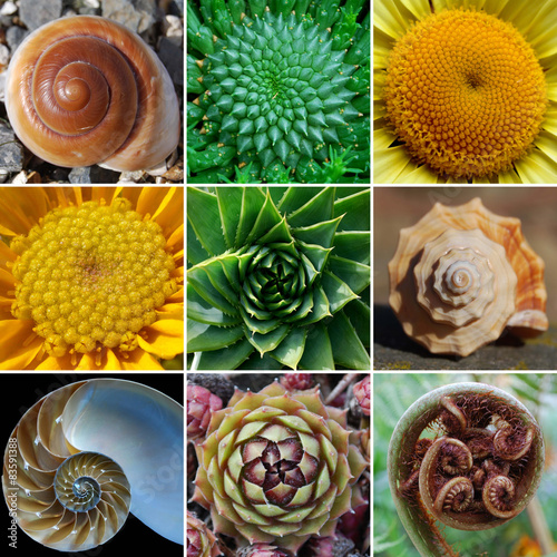 Keuken foto achterwand Natuur Beautiful Spirals in Nature - Phi, Golden Spiral, Fibonacci
