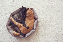Cats Sleeping And Hugging