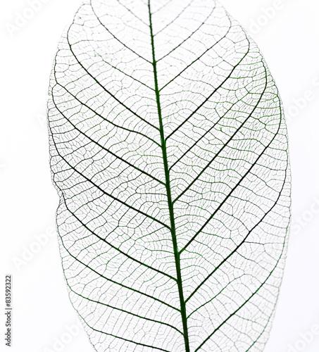 Poster Squelette décoratif de lame Leaf on the table