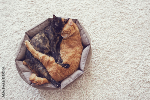 Obraz na plátně Kočky spaní a objímání