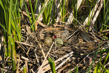 Bird's Nest .