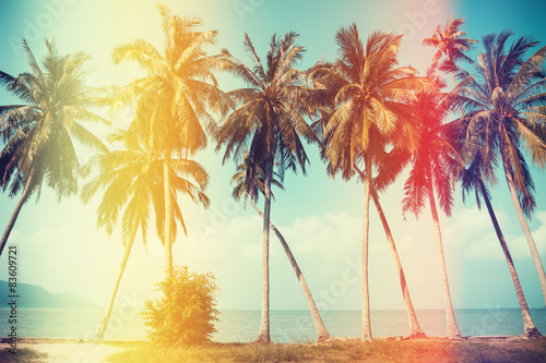 Printed kitchen splashbacks Beige Palm trees on the beach with old film light leaks