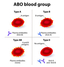 ABO Blood Groups