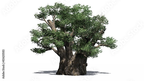 Fotografie, Tablou African Baobab tree - isolated on white background