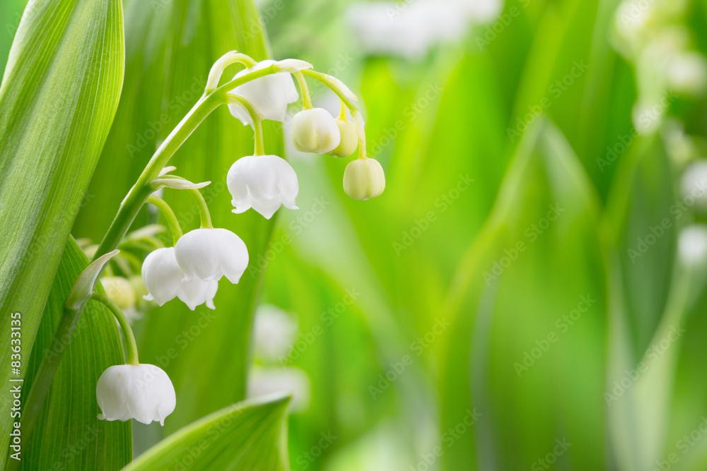 Fototapeta Hintergrund, Frühling, Maiglöckchen