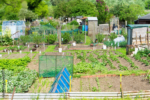 Photo Communal allotments in Suffolk, England.
