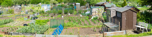 Photo Panoramic view of Communal allotments in Suffolk, England