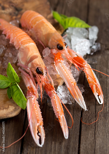 Poster Coquillage Raw langoustines on ice with basil
