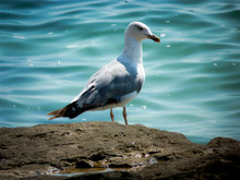 Lovely Seagull
