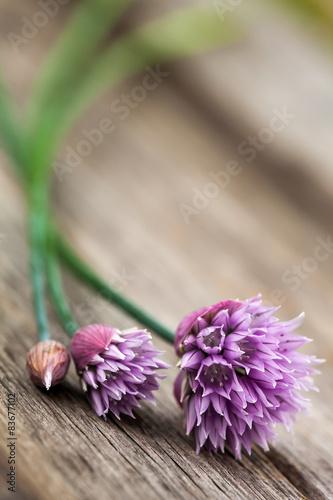 kwitnacy-szczypiorek-na-drewno