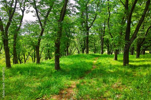 Deurstickers Weg in bos 新緑の森の中の小道