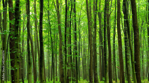 Foto op Canvas Bos green forest