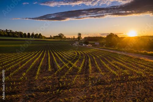 Paesaggio di campagna all'alba